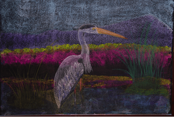 Zoology - Great Blue Heron