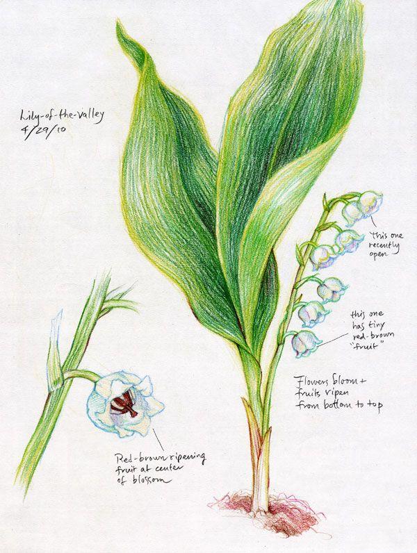 在高中植物版块中,学生们近距离观察植物,并用色彩画植物和花。